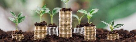 Foto de Plano panorámico de monedas de oro con hojas verdes y suelo, concepto de crecimiento financiero - Imagen libre de derechos