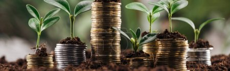 Photo for Panoramic shot of silver and golden coins with green leaves and soil, financial growth concept - Royalty Free Image