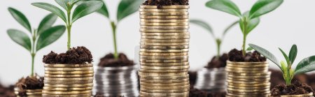 Photo pour Panoramic shot of coins with green leaves and soil Isolated On White, financial growth concept - image libre de droit