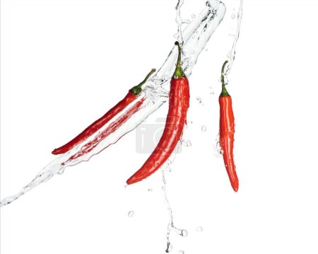 würzige rote Chilischoten mit klarem Wasser isoliert auf weiß