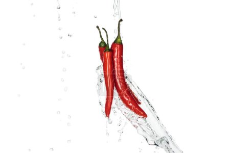 Photo for Bright spicy red chili peppers with clear water splash and drops isolated on white - Royalty Free Image