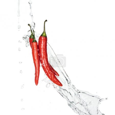 Photo for Bright spicy red chili peppers with water splash and drops isolated on white - Royalty Free Image