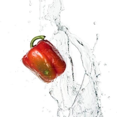 Photo pour Poivron rouge frais entier savoureux avec éclaboussure d'eau et gouttes isolées sur blanc - image libre de droit