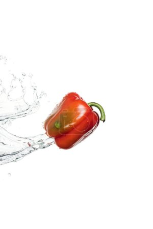 Photo for Whole tasty red bell pepper with clear water splash and drops isolated on white - Royalty Free Image