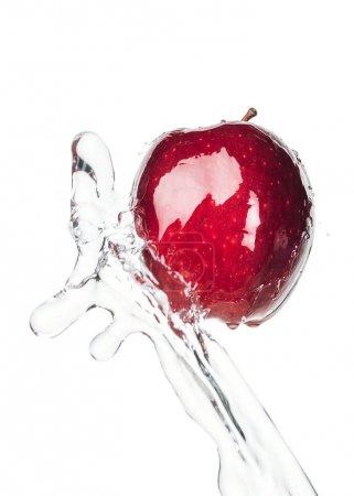Manzana roja madura y salpicadura de agua clara aislada en blanco