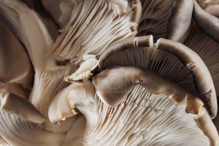 Nahaufnahme von weißen roh strukturierten Pilzen