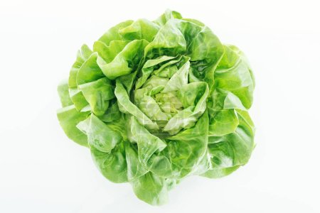 Photo for Top view of fresh natural wet green lettuce leaves isolated on white - Royalty Free Image