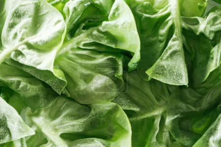 Photo for Close up view of fresh wet green lettuce leaves with water drops - Royalty Free Image