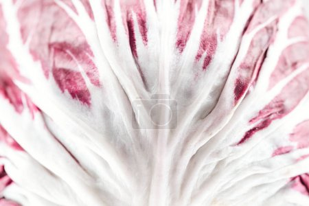 close up view of red cabbage white and purple textured leaf