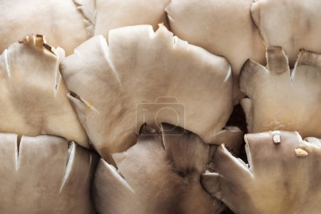 Photo for Close up view of white raw textured mushrooms in pile - Royalty Free Image