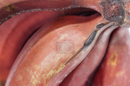Foto de Close up view of ripe exotic tasty red bananas - Imagen libre de derechos