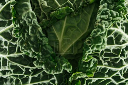 Photo for Close up view of textured green cabbage leaves - Royalty Free Image