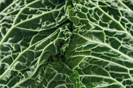 close up view of textured fresh green cabbage leaves