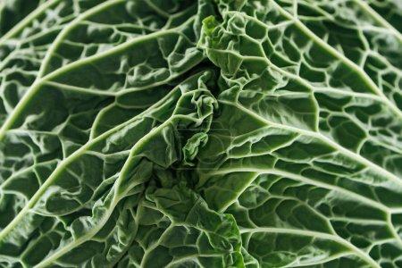 Photo pour Fermer la vue vers le haut des feuilles fraîches texturées de chou vert - image libre de droit