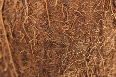 Foto de Vista de cerca de la cáscara de coco marrón texturizado - Imagen libre de derechos