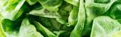 """Постер, картина, фотообои """"панорамный снимок зеленого влажного свежего органического салата листья с каплями"""""""