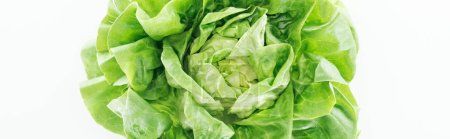 Photo for Panoramic shot of green fresh organic lettuce leaves isolated on white - Royalty Free Image