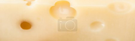 Photo for Panoramic shot of textured yellow cheese with wholes - Royalty Free Image