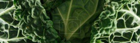 Photo pour Fermer la vue vers le haut des feuilles fraîches vertes de chou, projectile panoramique - image libre de droit
