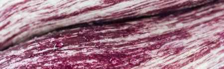 Photo pour Coup panoramique de feuille de chou rouge fraîche avec des gouttes d'eau - image libre de droit