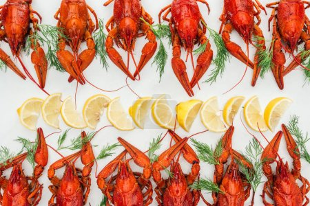 Photo for Top view of red lobsters, lemon slices and green herbs on white background - Royalty Free Image