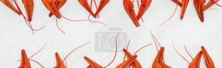 Foto de Foto panorámica de garras de langostas rojas sobre fondo blanco - Imagen libre de derechos