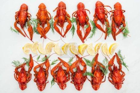 Photo pour Vue de dessus des homards rouges, tranches de citron et herbes vertes sur fond blanc - image libre de droit