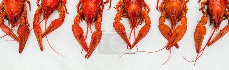 Photo pour Coup panoramique des griffes et des têtes rouges de homards sur le fond blanc - image libre de droit