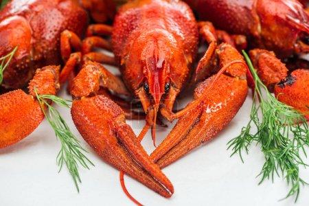 Photo pour Vue rapprochée des homards rouges et des herbes vertes sur fond blanc - image libre de droit