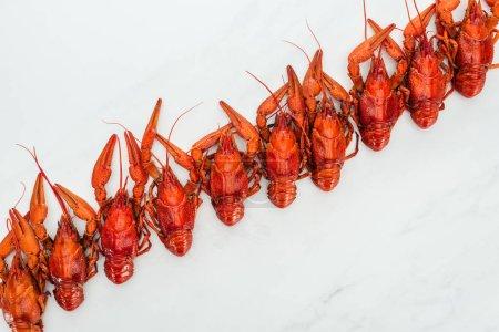 Photo pour Vue supérieure des homards rouges sur le fond blanc - image libre de droit
