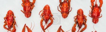 Photo pour Plan panoramique de homards rouges sur fond blanc - image libre de droit