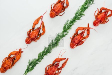 Photo pour Top view of red lobsters and green herbs on white background - image libre de droit