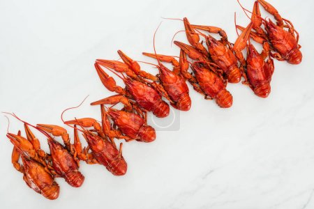 Photo pour Vue de dessus des homards rouges sur fond blanc - image libre de droit