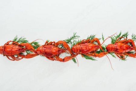 Photo pour Vue supérieure des homards rouges et des herbes vertes sur le fond blanc - image libre de droit