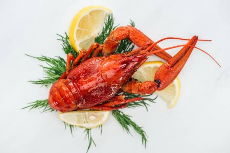 Photo for Top view of red lobster on lemon slices, herbs and white background - Royalty Free Image