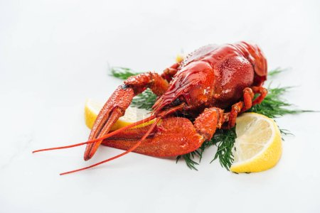 Photo for Red lobster with lemon slices and green herbs on white background - Royalty Free Image