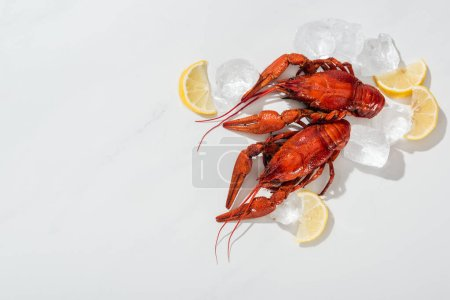 Photo for Top view of red lobsters, lemon slices and green herbs with ice cubes on white background - Royalty Free Image