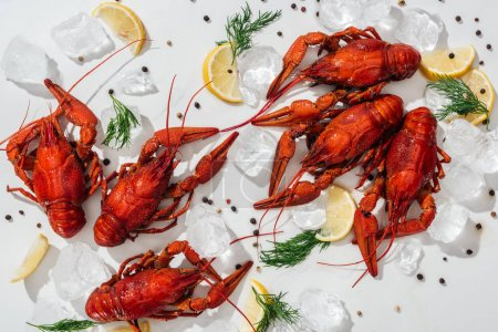 Photo for Top view of red lobsters, peppers, lemon slices and green herbs with ice cubes on white background - Royalty Free Image