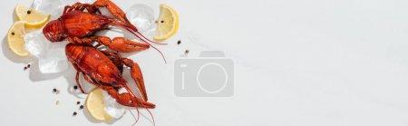 Photo pour Coup panoramique de homards rouges, poivrons, tranches de citron et glaçons sur fond blanc - image libre de droit
