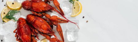 Photo for Panoramic shot of red lobsters, peppers, lemon slices and green herbs with ice cubes on white background - Royalty Free Image