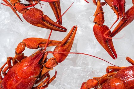 Photo for Top view of red lobsters on white background with ice cubes - Royalty Free Image