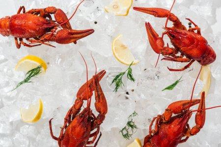 Photo pour Plan panoramique de homards rouges, poivrons, tranches de citron et herbes vertes avec glaçons sur fond blanc - image libre de droit