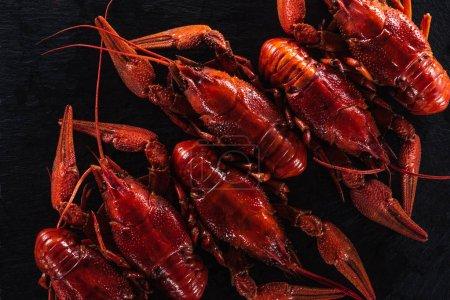 Photo pour Vue du haut des homards rouges sur la surface noire - image libre de droit