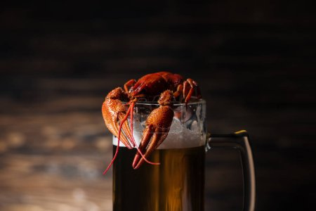 Photo for Red lobster on glass with beer on wooden surface - Royalty Free Image