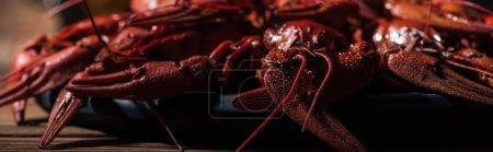 Foto de Foto panorámica de langostas rojas en la superficie de madera - Imagen libre de derechos