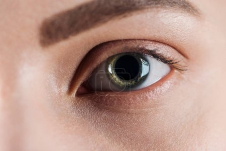 Photo pour Vue rapprochée de la jeune femme oeil vert avec cils et sourcils en regardant la caméra - image libre de droit