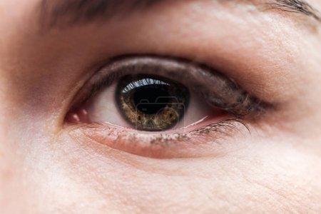 Photo pour Fermer vers le haut la vue de l'oeil adulte de femme avec des cils et le sourcil regardant l'appareil-photo - image libre de droit