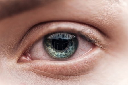 Photo pour Vue rapprochée de la jeune femme oeil vert avec cils et sourcils - image libre de droit