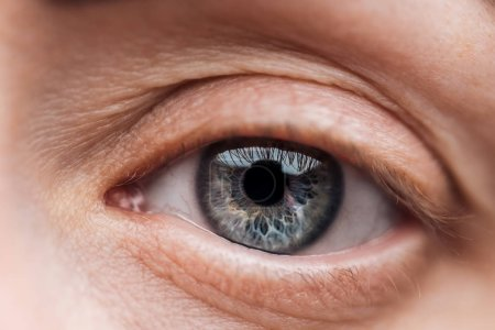 Photo for Close up view of young woman blue eye with eyelashes and eyebrow - Royalty Free Image