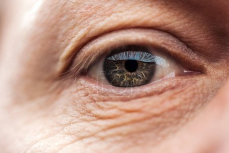 Photo pour Vue rapprochée de l'œil d'homme âgé avec des cils et des sourcils regardant la caméra - image libre de droit